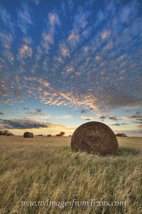texas sunset,texas hay,hay bales,texas ranch images,texas landscapes,texas sunset images,texas photos,texas prints, photo