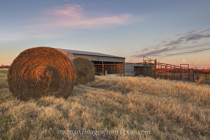 texas barn,texas hay,texas hay bales,texas sunset,moon rise,full moon rising,texas barn images,texas scenes,traces of texas, photo