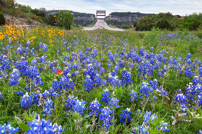 360 bridge photos,bluebonnet images,texas wildflowers,360 bridge,austin texas images, photo