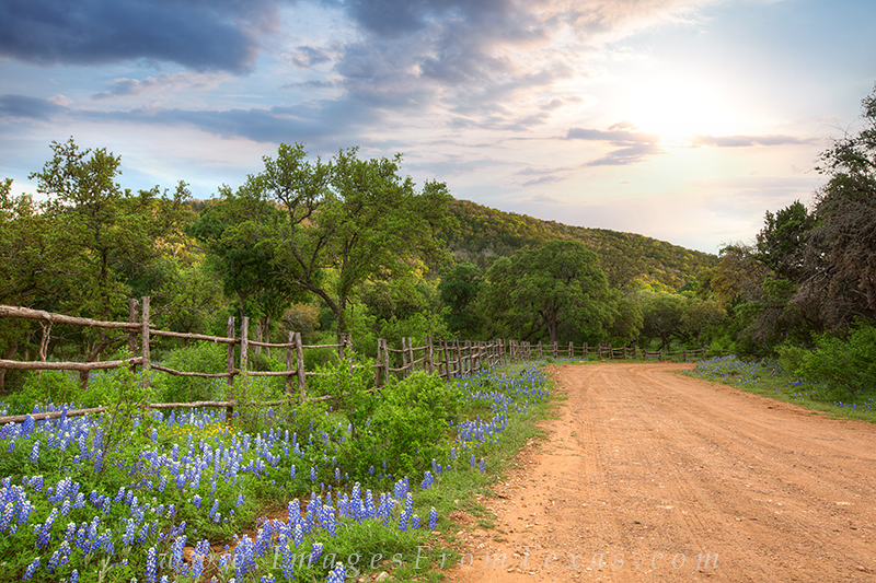 bluebonnet photos,texas country roads,bluebonnet prints,texas wildflowers,bluebonnets, photo