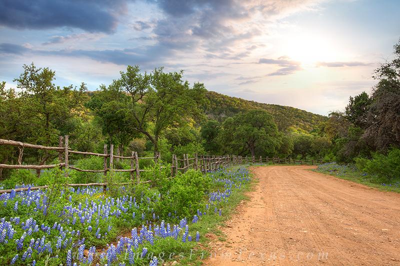 bluebonnet photos,texas country roads,bluebonnet prints,texas wildflowers,bluebonnets, photo