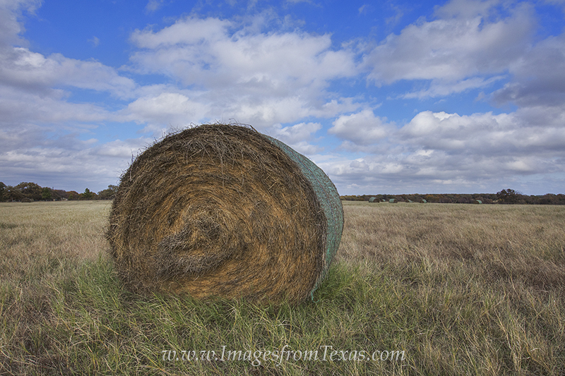 hay bale,texas hay bale,bale of hay,texas images,texas ranch, photo