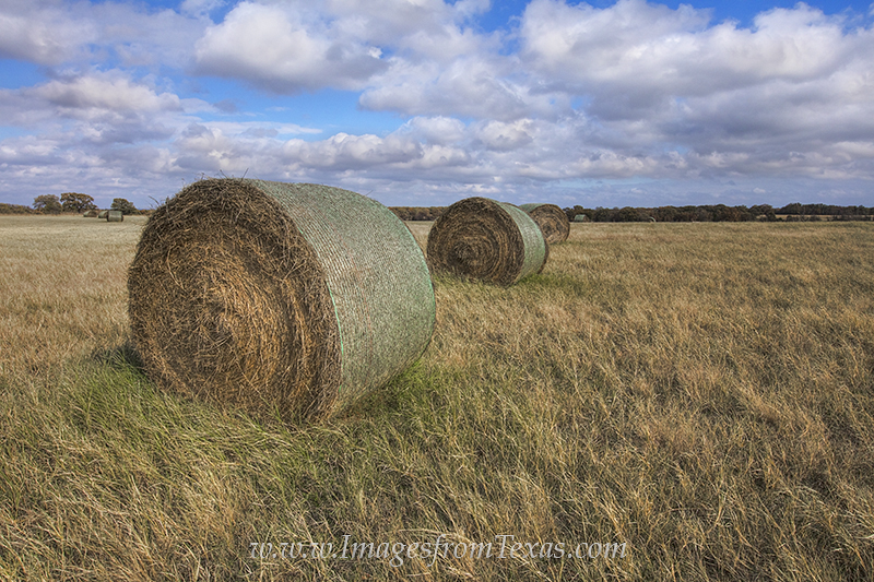 hay bales,bales of hay,texas ranch,texas ranch images,hay images,hay bale images,texas landscapes, photo