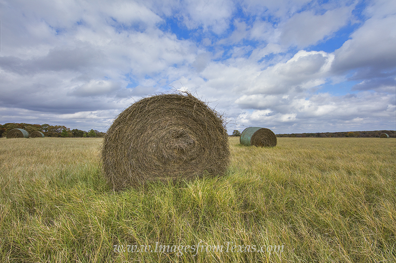 hay bales,texas ranch,texas hay,hay,texas landscapes,prints,images, photo
