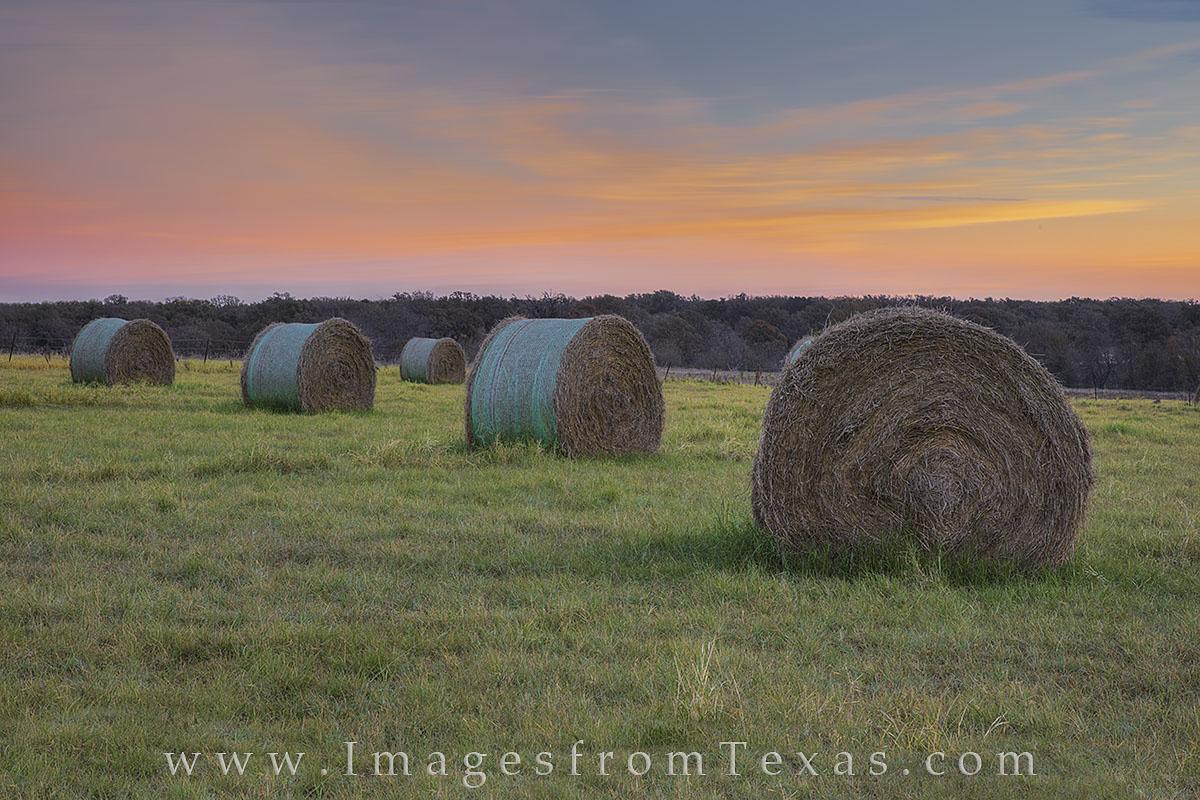 texas hay, hay field, texas hay field, texas landscape, texas farm, texas ranch, texas sunrise, texas harvest, texas, hay, photo