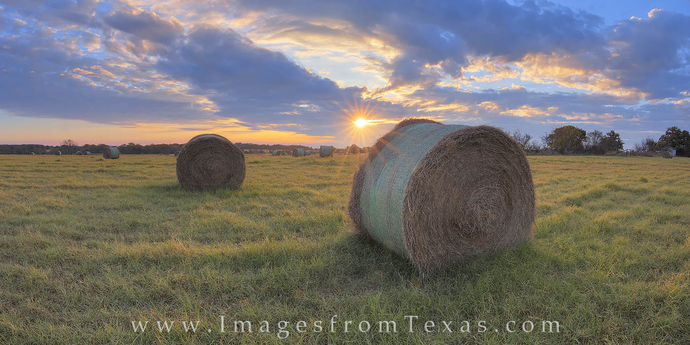 This panorama shows a lonely hay field at sunrise on a cool, calm November morning. While I enjoyed this sunrise, coyotes yipped...
