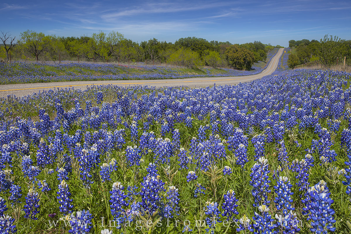 texas hill country,bluebonnets,wildflowers,texas highways, photo