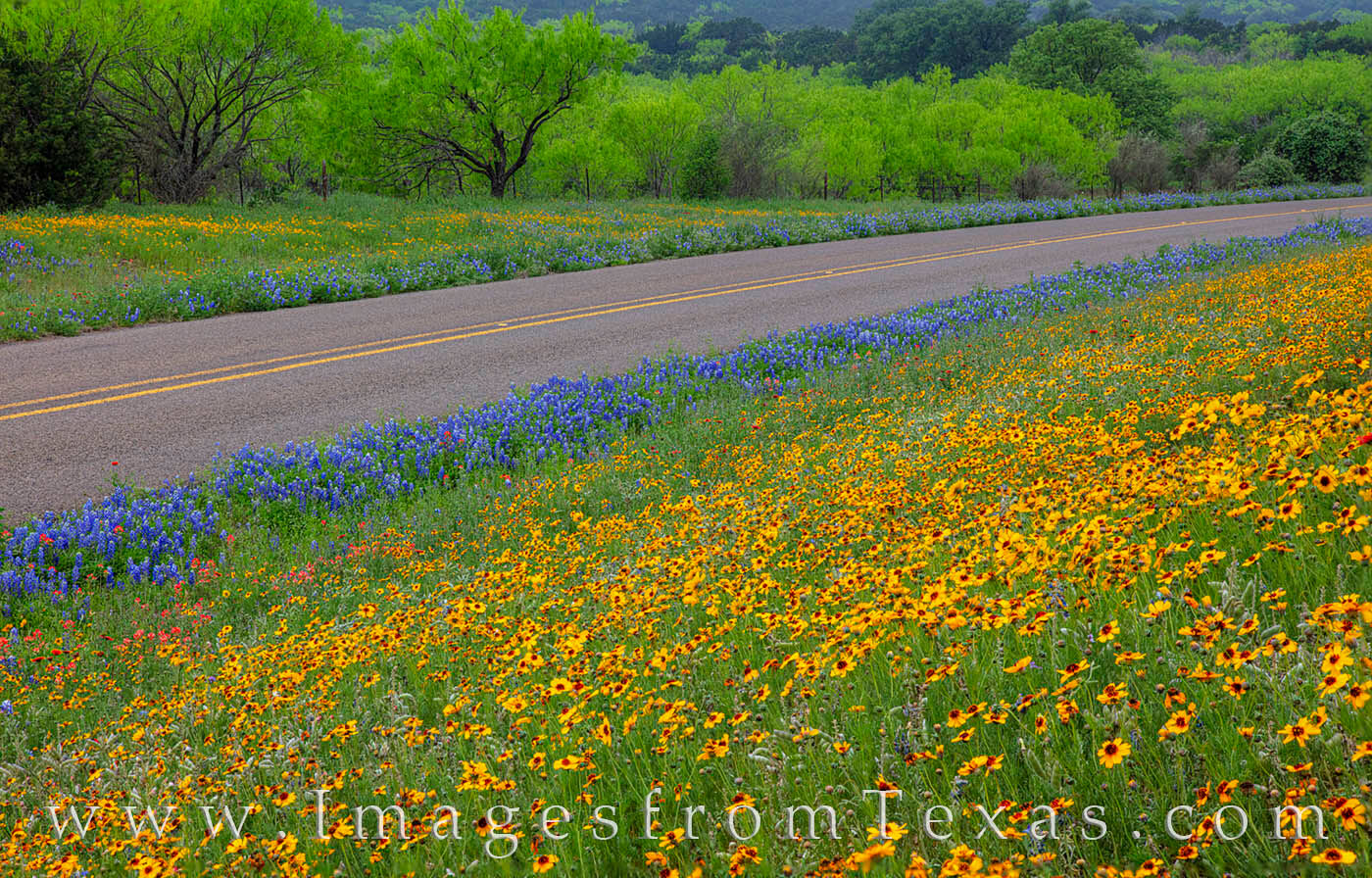 Along a small highway in the Texas Hill Country, Spring shows off its color with yellows, reds, and blues. Wildflowers were abundant...