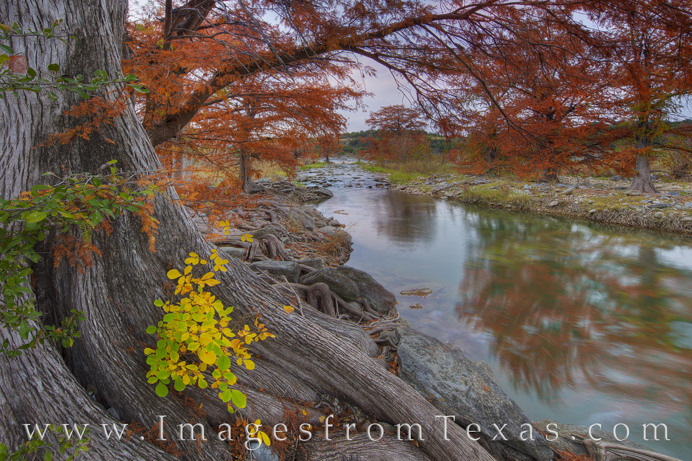Autumn colors in November fill the banks of the Pedernales River on a cool morning. The reds and oranges of Cypress come alive...