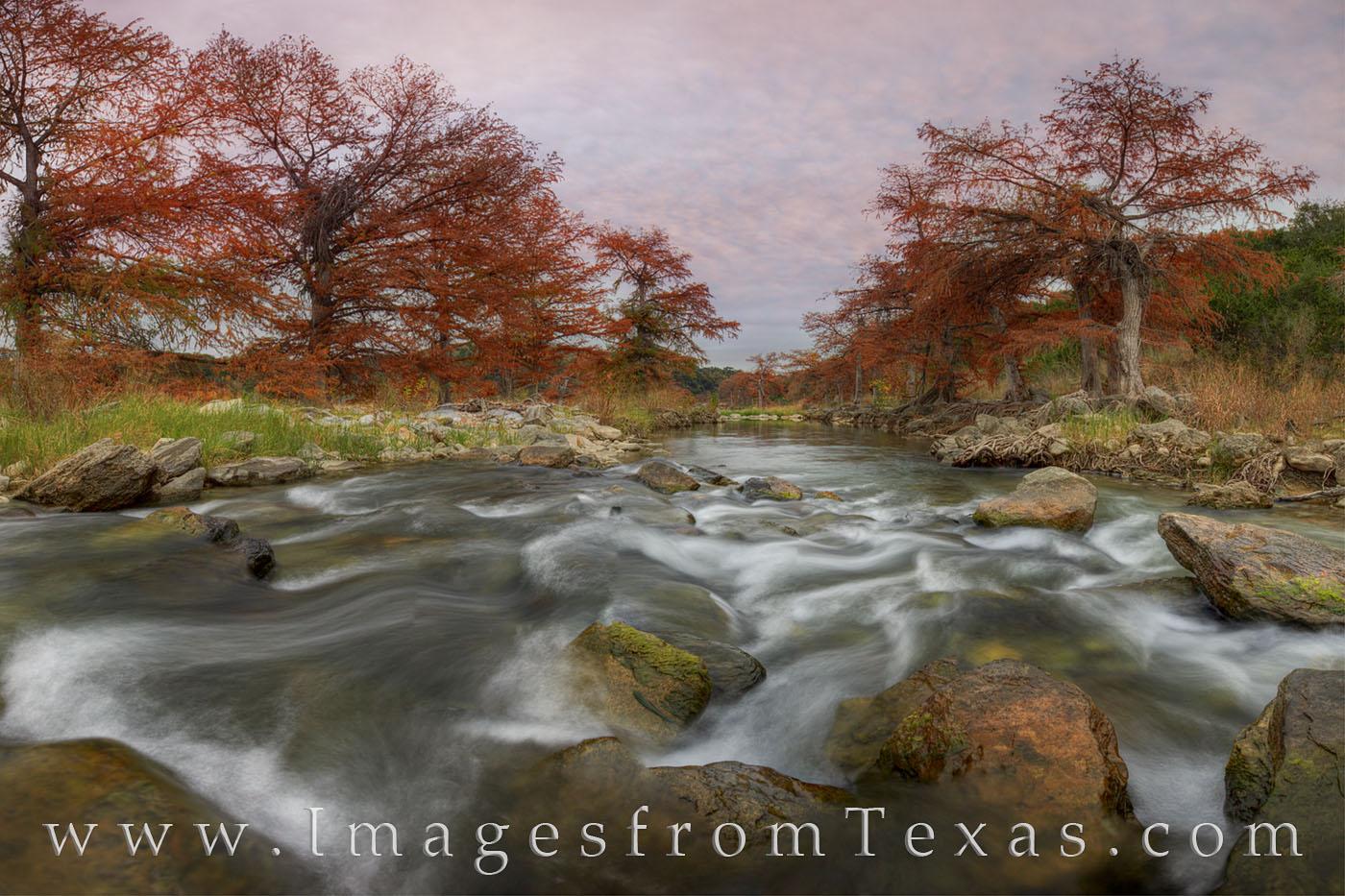 autumn colors, fal colors, cypress, pedernales river, texas state parks, pedernales falls, texas fall colors, texas colors, photo