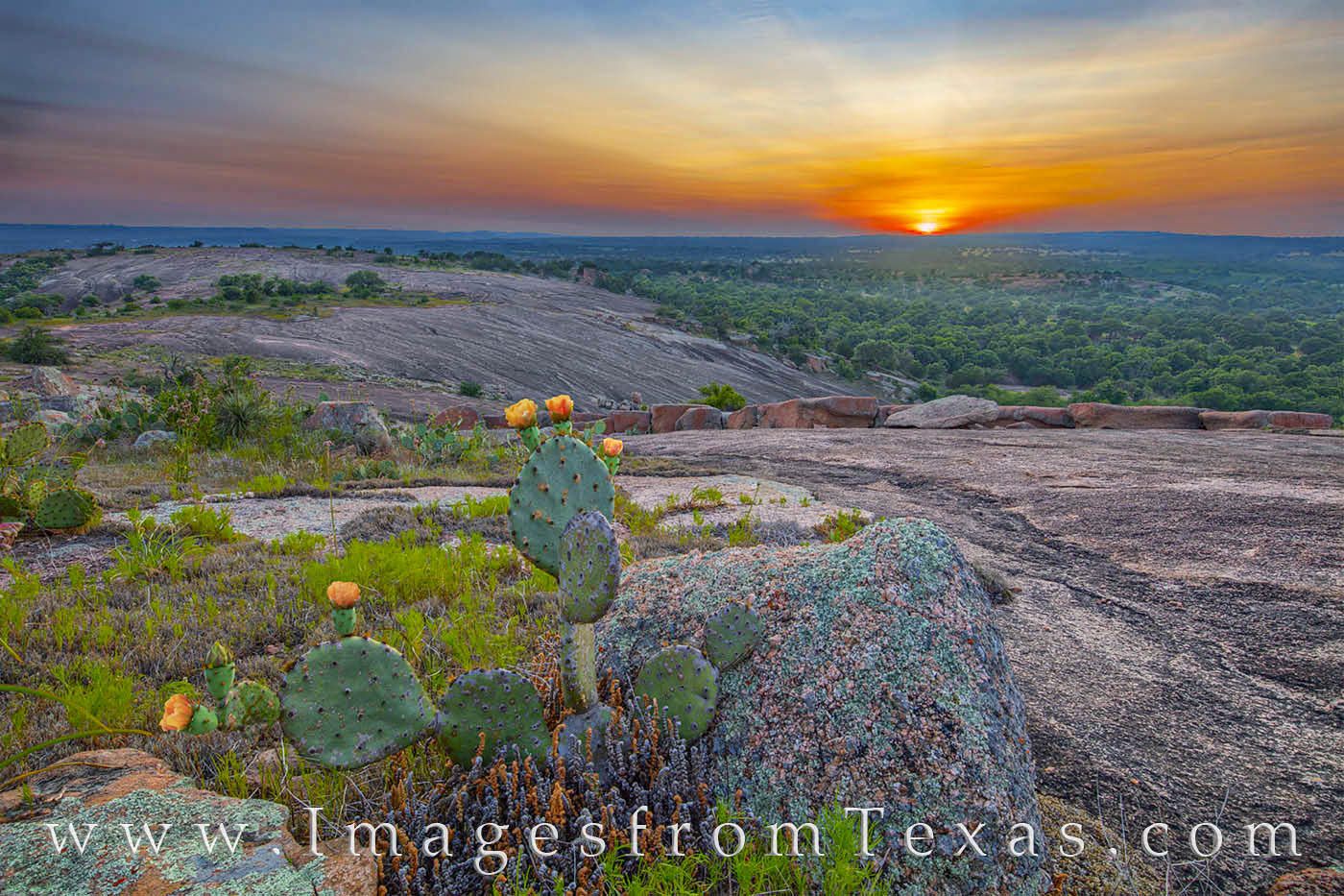 sunset, hill country, prickly pear, cactus, lizard, enchanted rock, little rock, photo