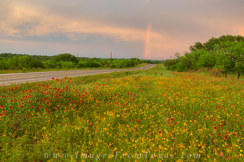 texas wildflowers,texas wildflower photos,texas hill country,rainbow, photo