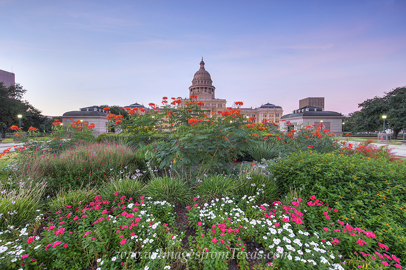 texas state capitol,state capitol gardens,austin texas images,texas capitol prints,texas capitol flowers, photo
