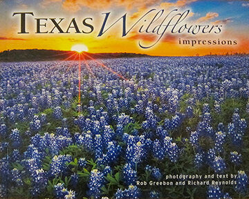 Texas Wildflowers Impressions
