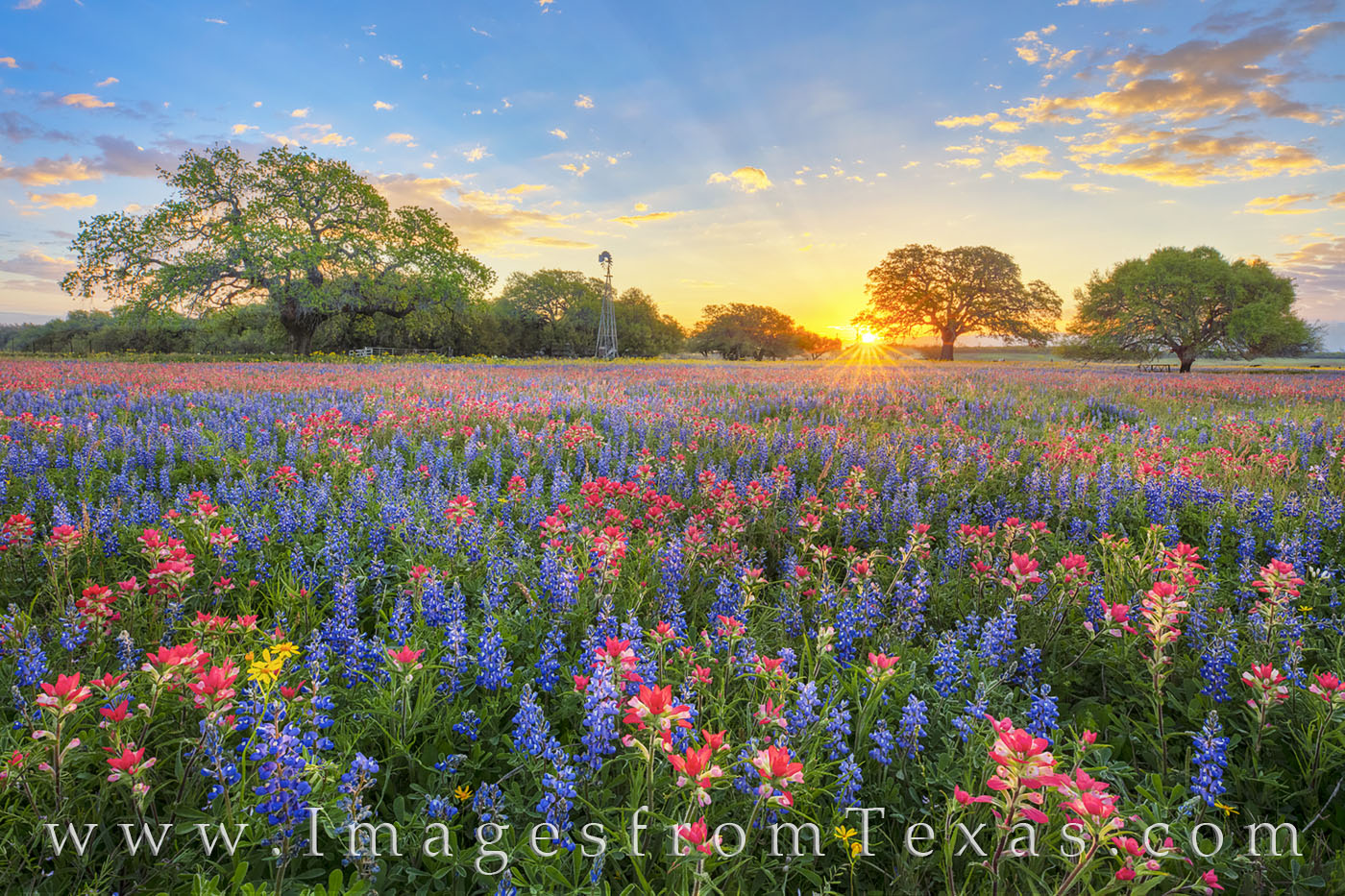 wildflowers, bluebonnets, paintbrush, sunrise, indian paintbrush, windmill, morning, blue, red, poteet, texas, cold, calm, beauty, Atascosa county