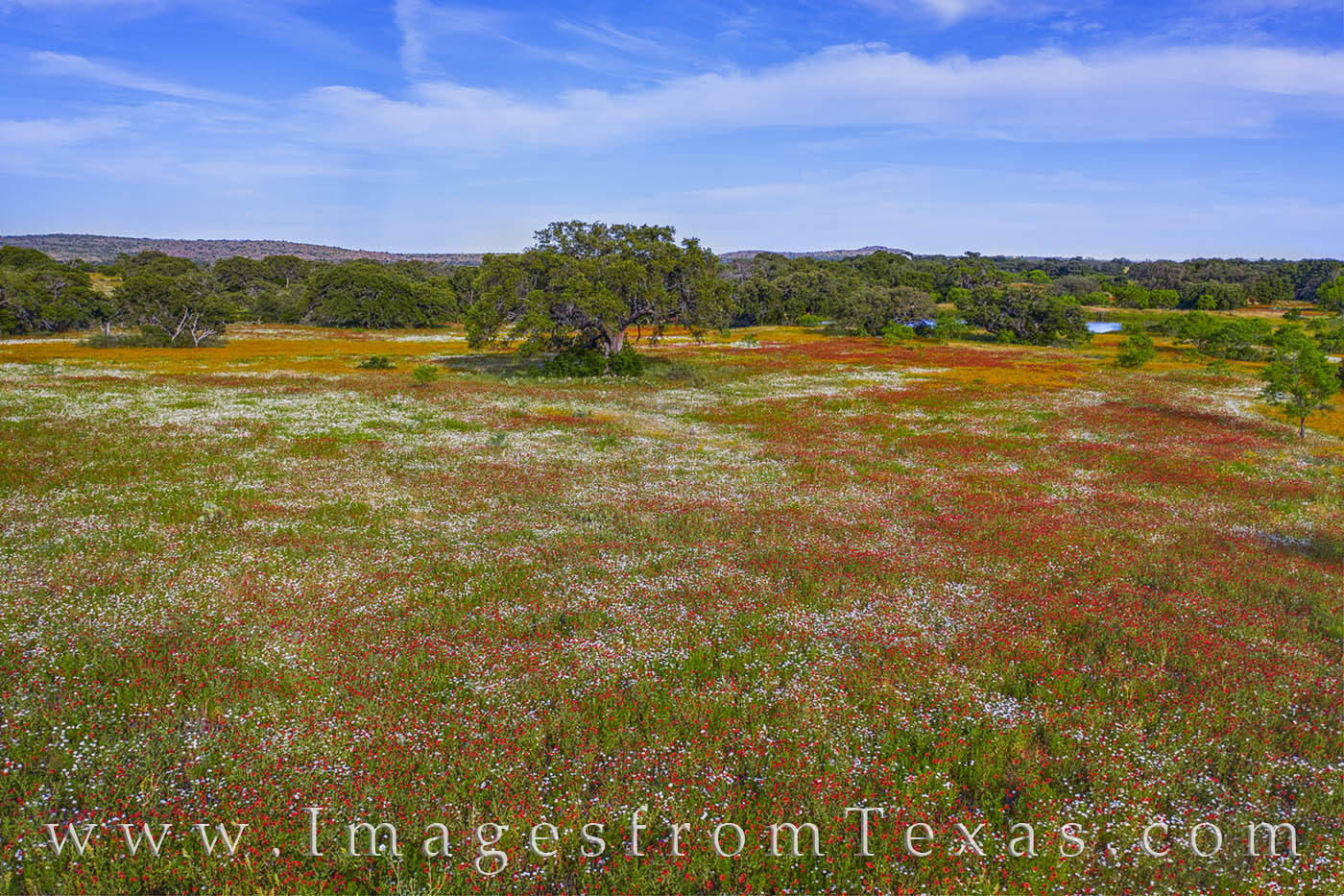 wildflowers, hill country, indian blankets, afternoon, aerial, drone, beauty, photo