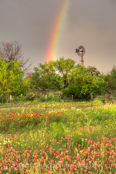 Texas wildflowers,rainbow,windmill,indian paintbrush,mason,llano,texas hill country, photo