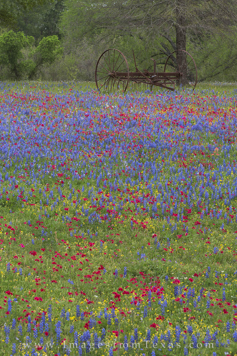 texas wildflowers, texas landscapes, wildflowers, luling texas, spring, texas spring, texas, photo