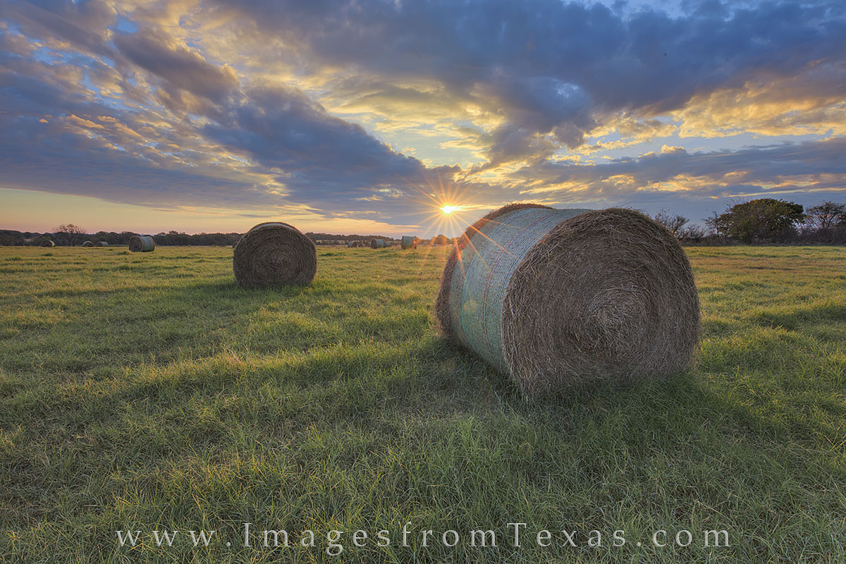 texas hay, hay field, texas hay field, texas landscape, texas farm, texas ranch, texas sunrise, texas harvest, texas panorama, photo
