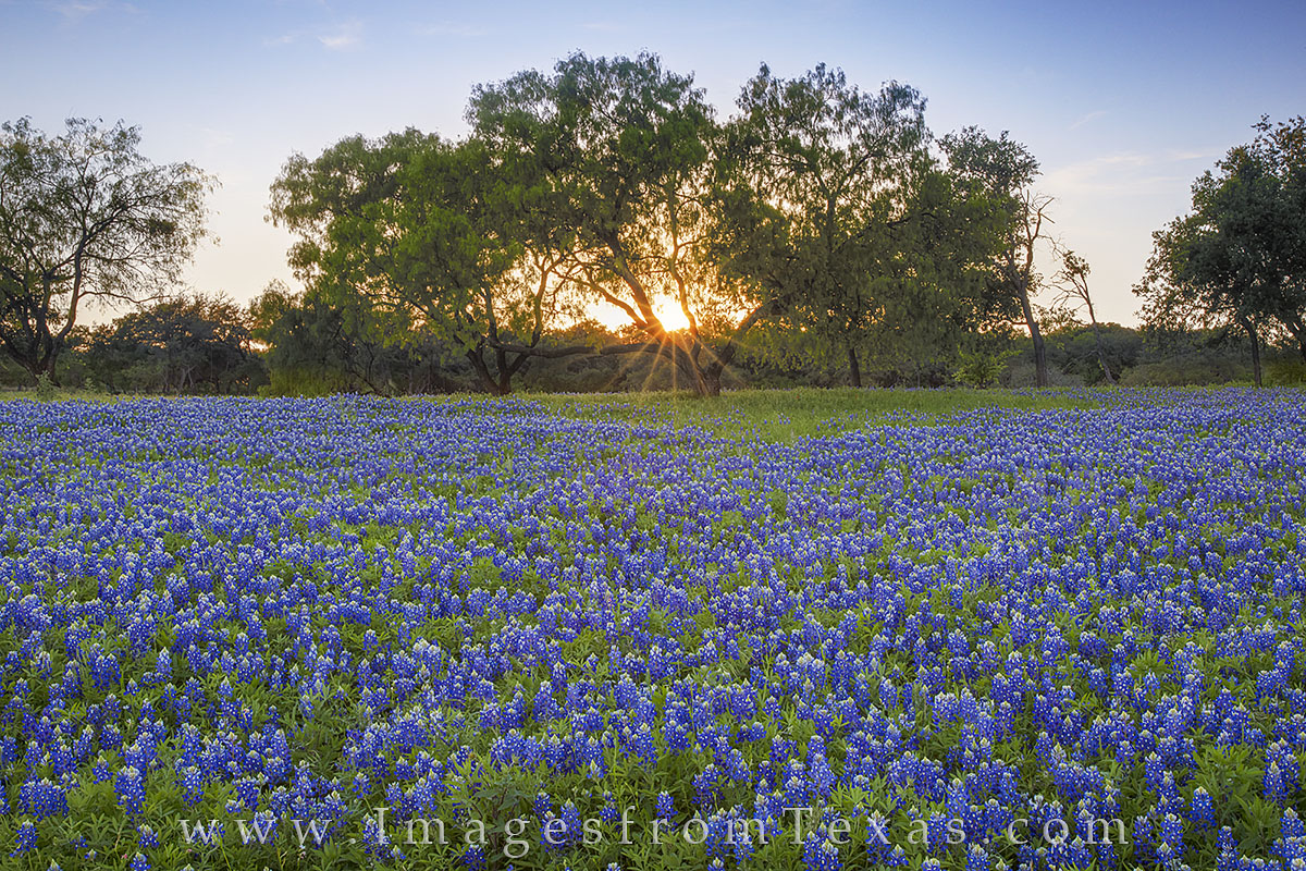 Just south of Marble Falls on the edge of the Texas Hill Country, this beautiful field of bluebonnets presented itself to me...
