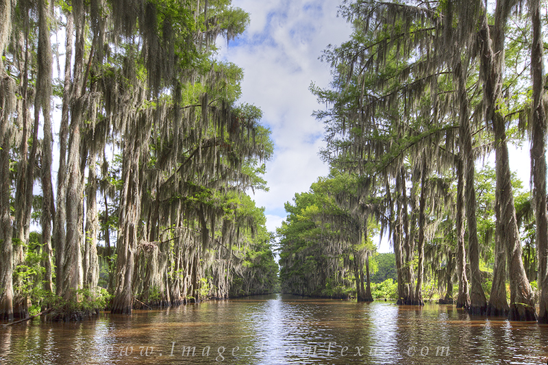 The government ditch is a well known landmark at Caddo Lake, Dredged out by the government to create a corridor to connect two...