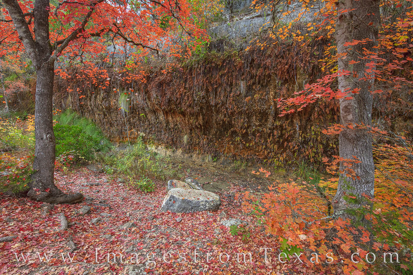 the grotto, lost maples, texas state parks, bigtooth maple, lost maples prints, november, fall colors, autumn, photo