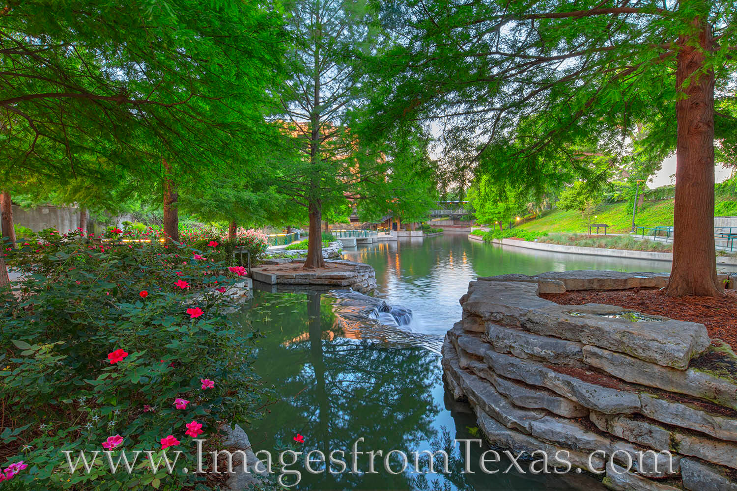 On a peaceful summer morning, the San Antonio River flows through the Pearl District near downtown. The roses were in bloom and...