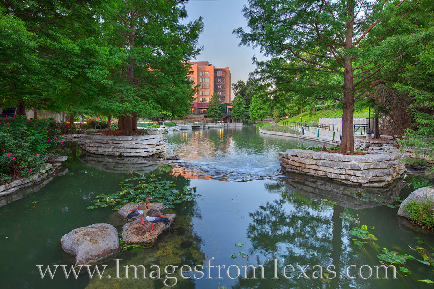 Two ducks wathed me as I photographed them enjoying the cool morning in the Pearl District near downtown San Antonio. This area...
