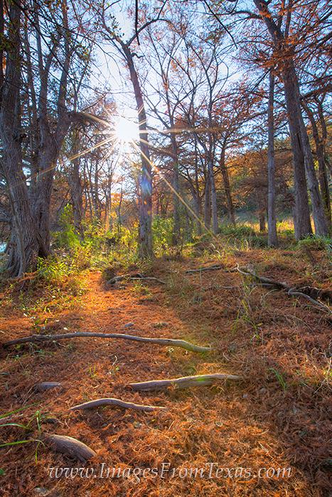 cypress trees,pedernales falls state park,pedernales falls images,autumn colors,fall colors in texas, photo