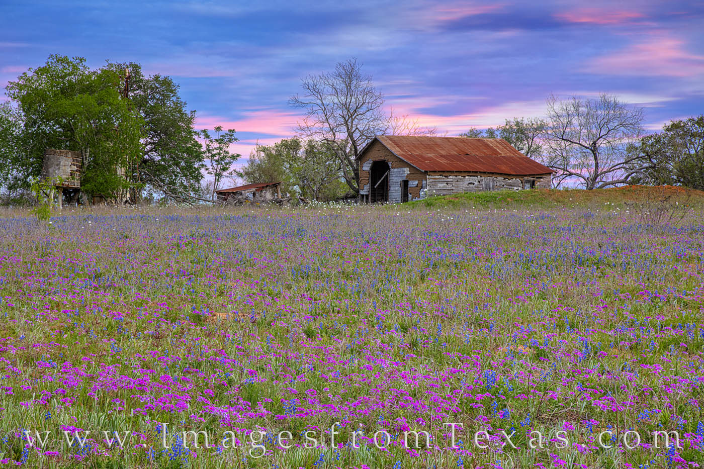 An old barn hangs on beneath the changing evening light of a late spring sunset. In the foreground, pink phlox blooms and a few...