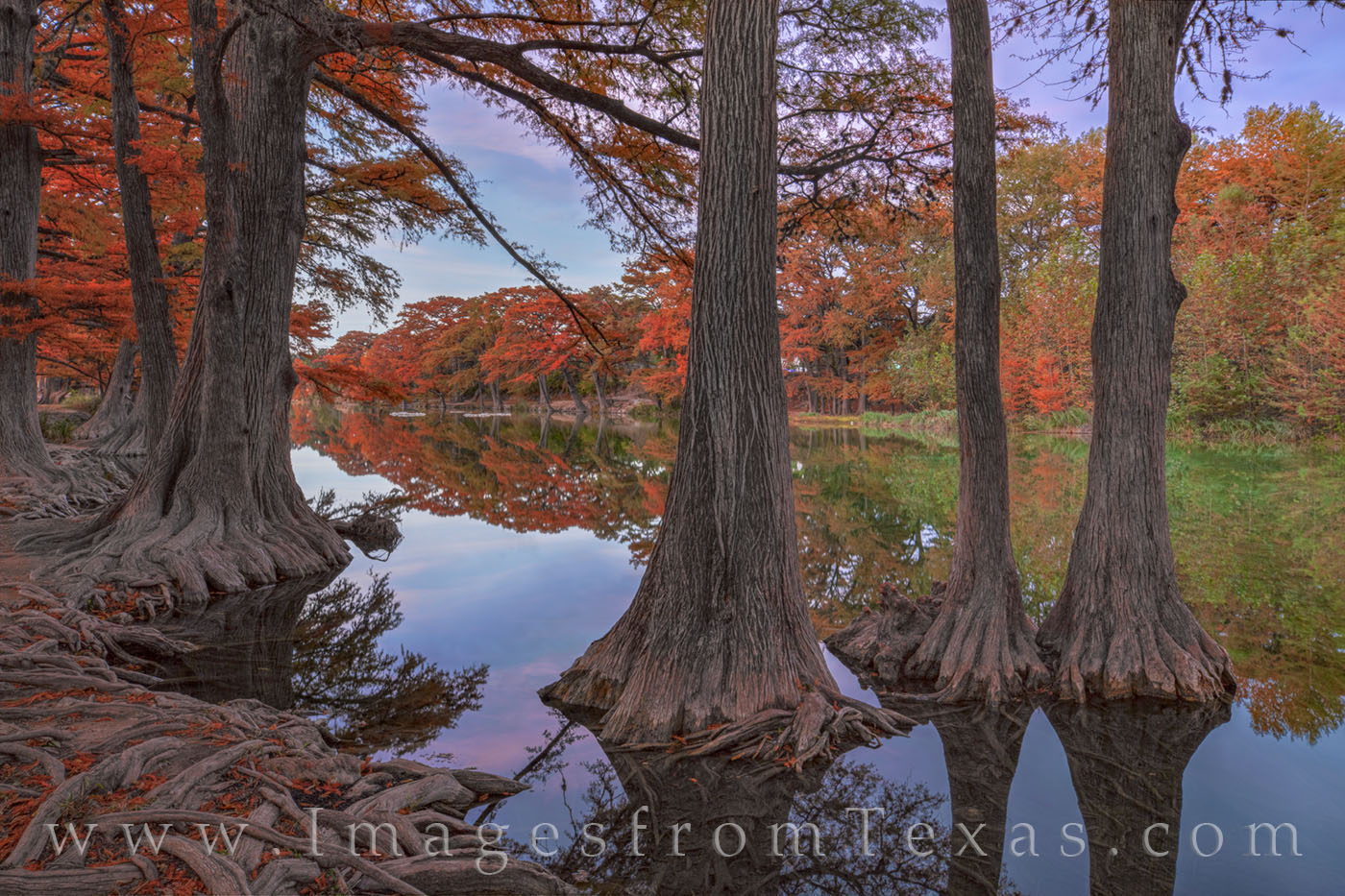 cypress, garner state park, fall, autumn, frio river, evening, november, orange, photo