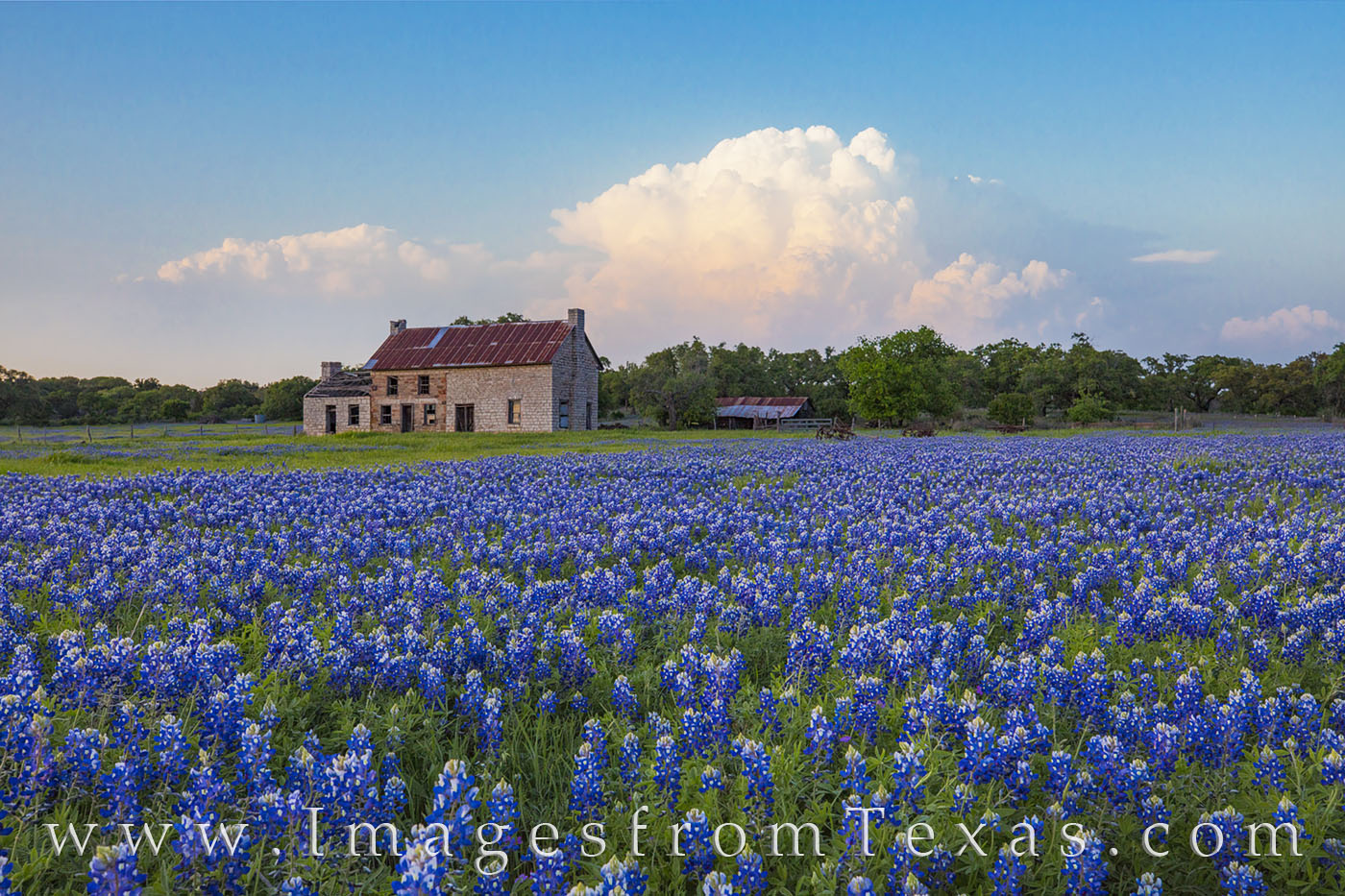 thunderheads, storms, bluebonnets, bluebonnet house, marble falls, wildlfowers, texas wildflowers, texas bluebonnets, bluebonnet images, photo