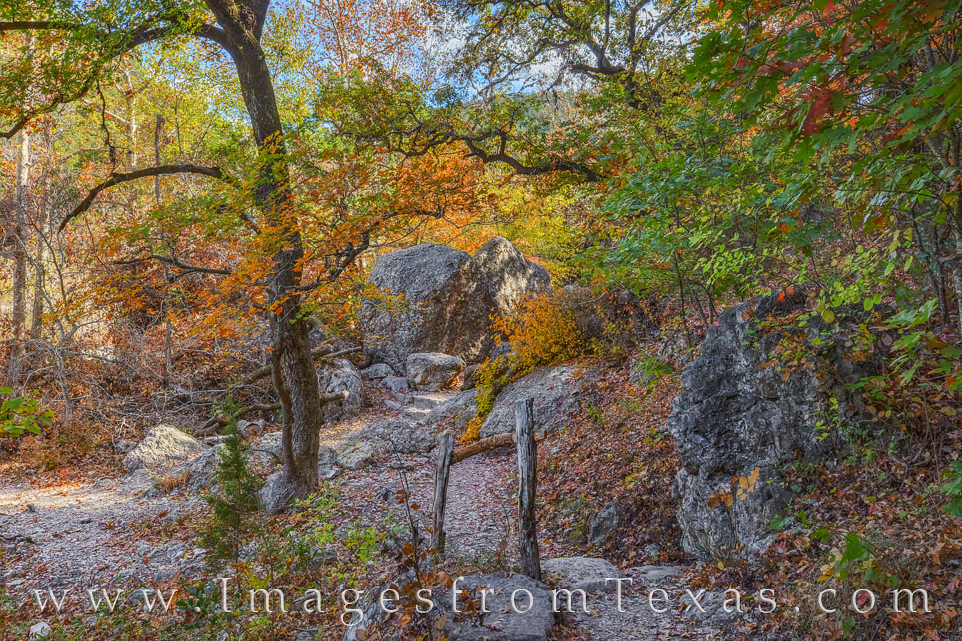 lost maples, lost maples print, maple trees, texas state park, maple trail, november, fall, autumn, red, orange, hill country, photo