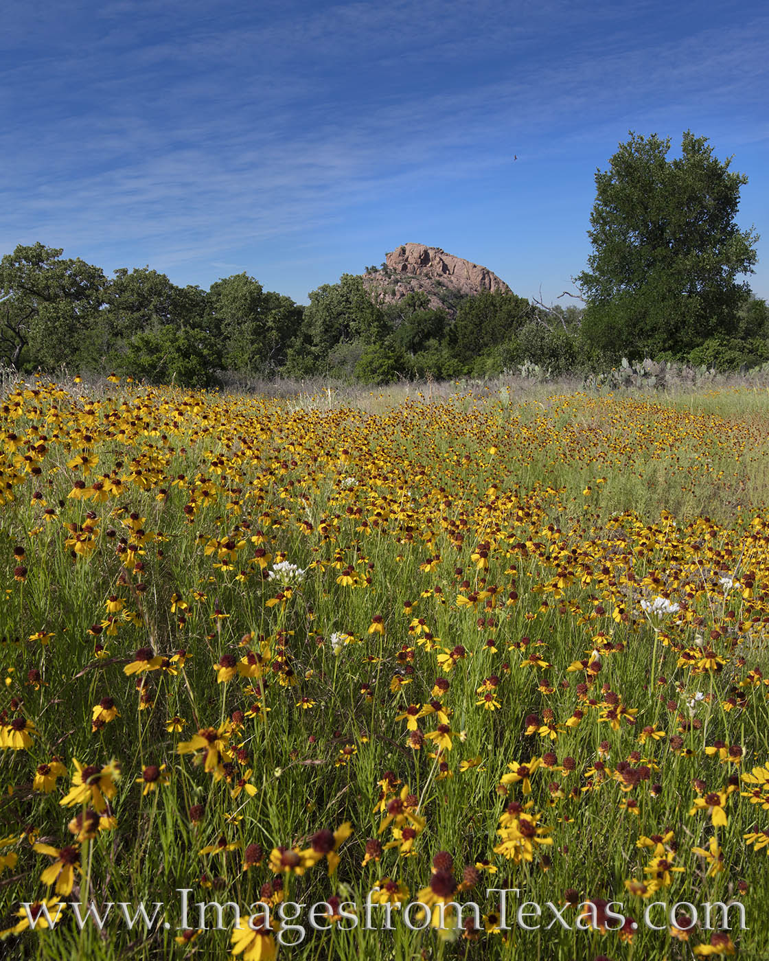 enchanted rock, turkey peak, texas wildflowers, texas state parks, spring, color, exploring texas, photo