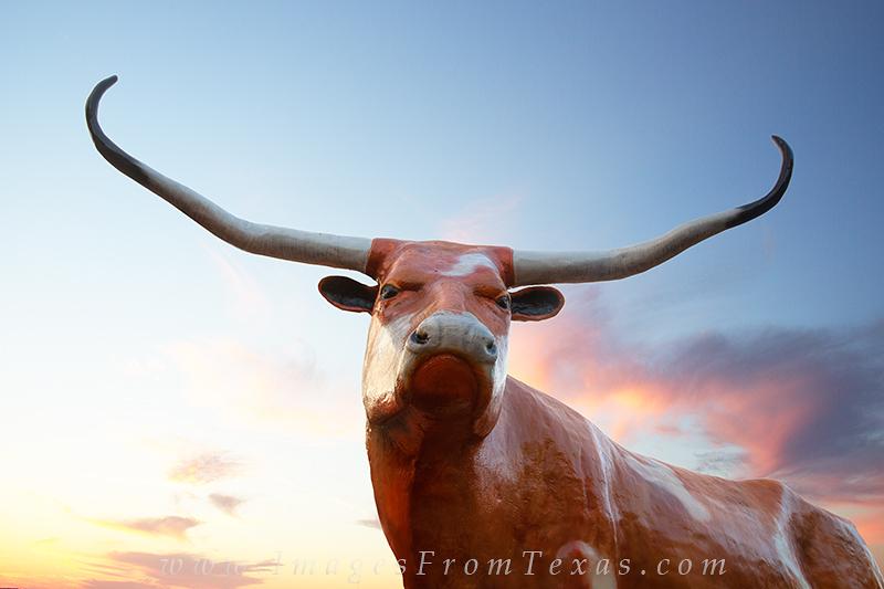 University of Texas,UT co-op,UT longhorn,longhorns, photo