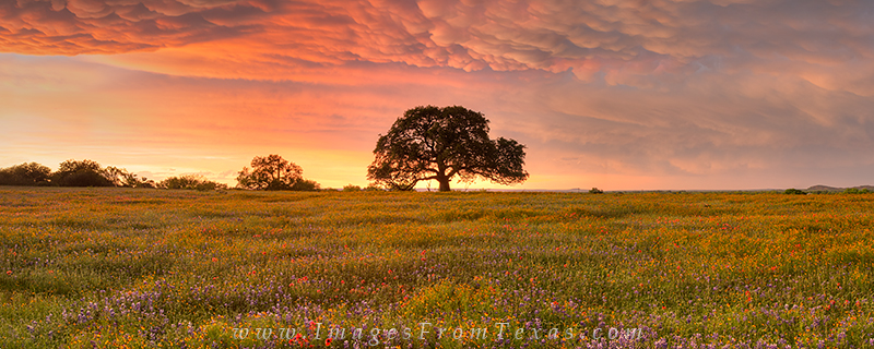 Texas wildflower panorama,texas landscape,texas wildflower images,texas hill country pano,texas hill country photos, photo