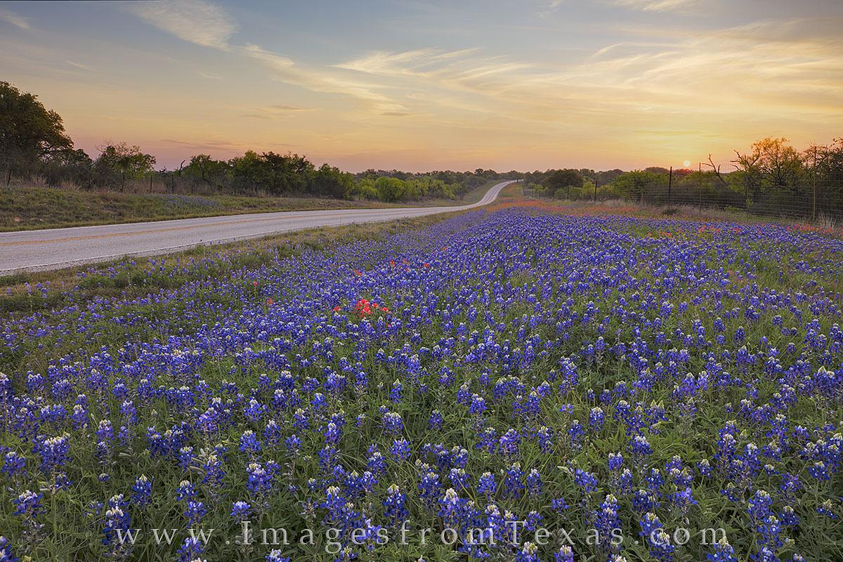 bluebonnet photos, texas wildflower prints, texas wildflower photos, bluebonnets, texas highways, texas hill country 29, llano, mason, 2017 wildflowers, texas landscapes, texas sunrise, photo