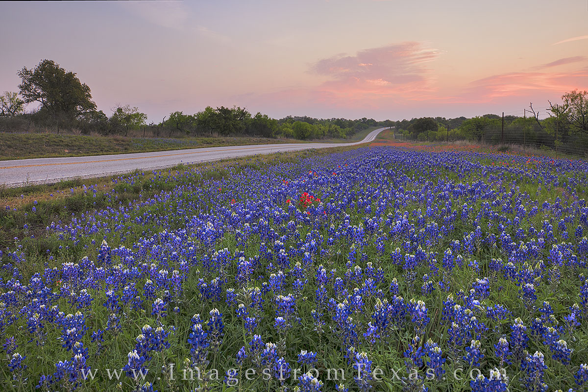 bluebonnet prints, bluebonnet highway, texas wildflowers, sunrise, texas hill country, wildflower photos, llano, mason, 29, 2017, texas landscapes, highway