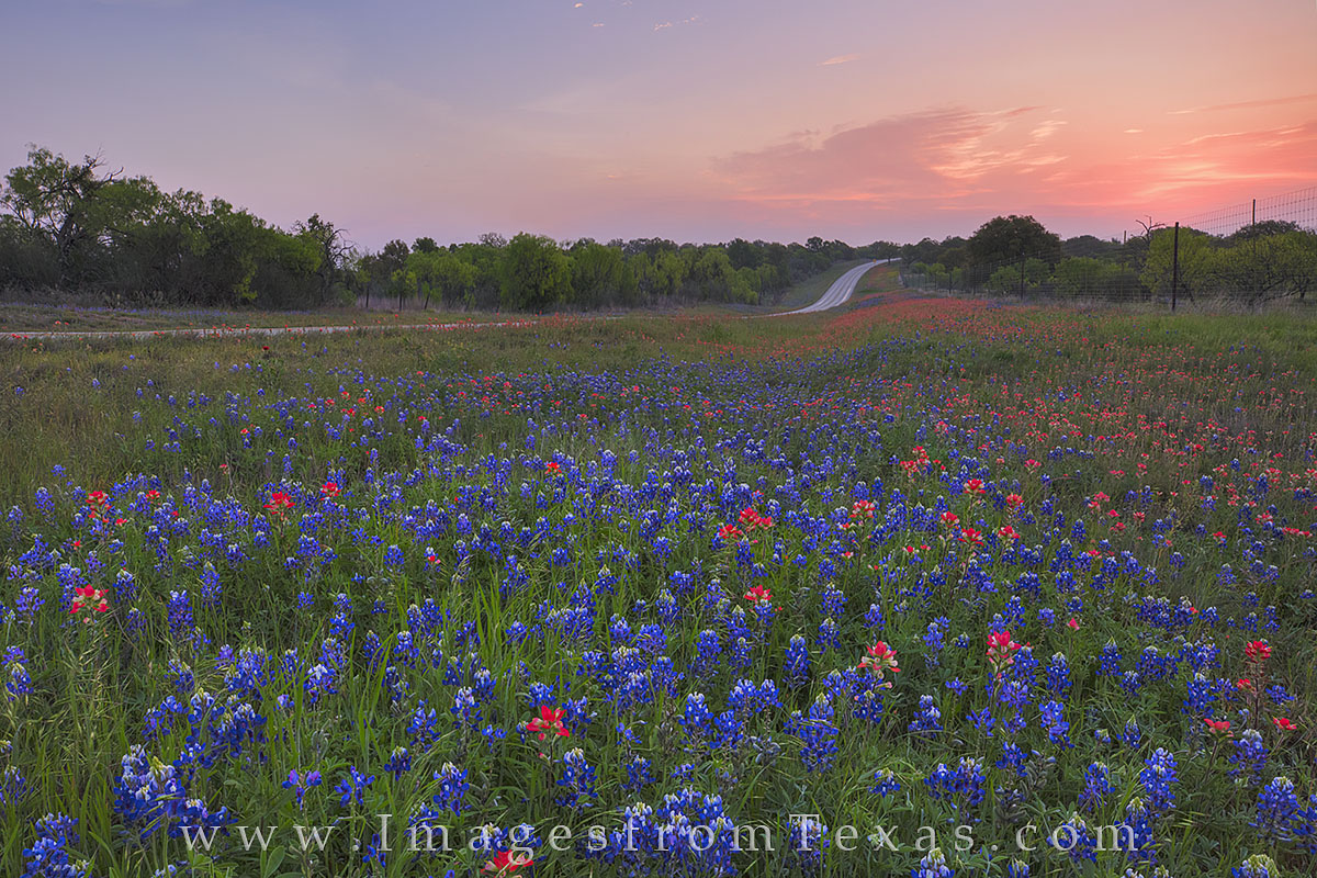 Bluebonnets and Indian Paintbrush, two of Texas' favorite wildflowers, filled this roadside between Mason and Llano. The sun...