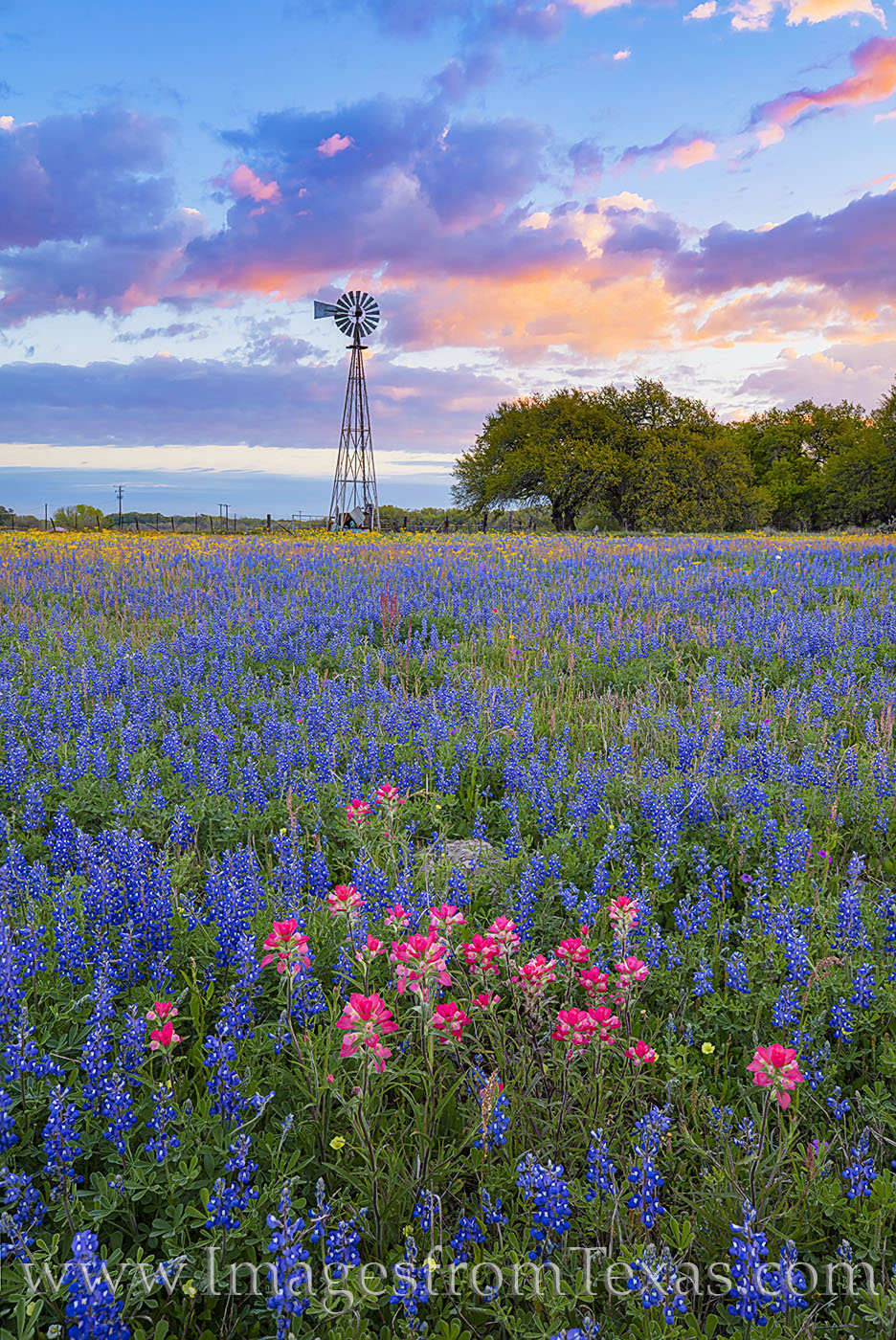 A windmill rises over a field of bluebonnets, groundsel, and Indian Paintbrush on a cold March morning south of San Antonio....