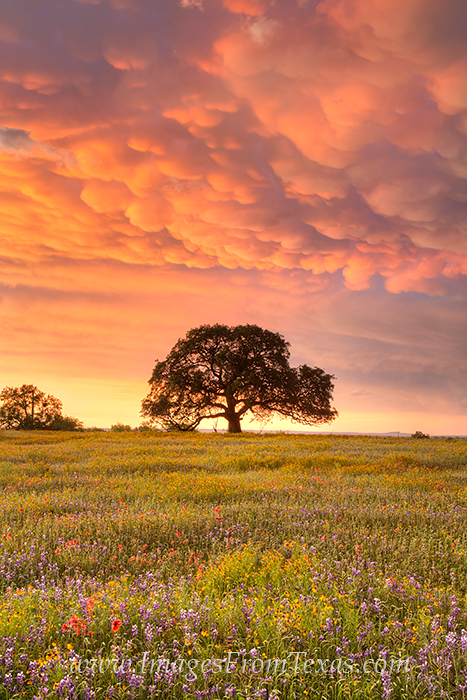 texas wildflowers,texas wildflower photos,texas landscapes,mammatus clouds,texas images, photo