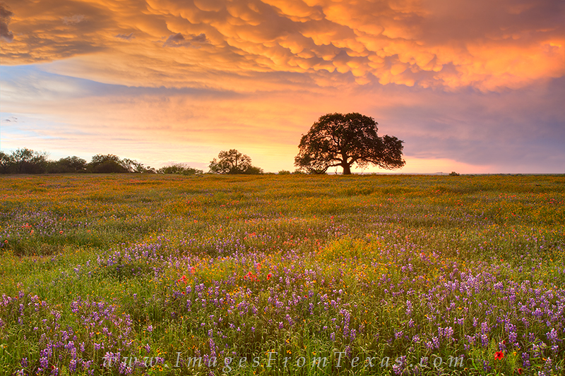 texas wildflowers,wildflower photos,texas hill country,hill country sunset,texas in spring,bluebonnets,texas landscapes, photo