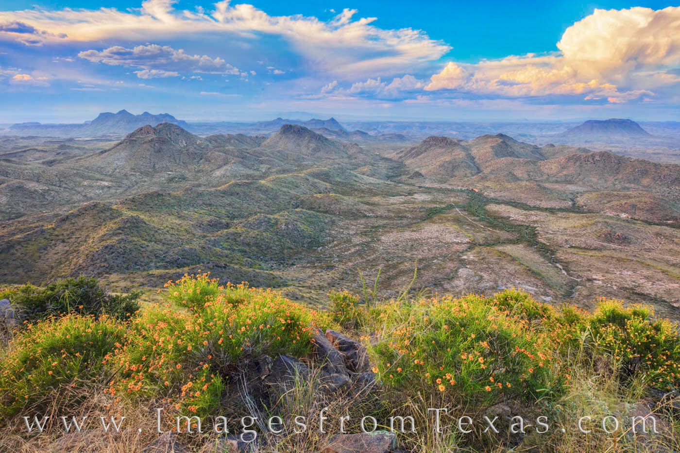 oso peak, oso mountain, big bend ranch, big bend ranch state park, october, wildflowers, gold, clouds, desert, beauty, photo