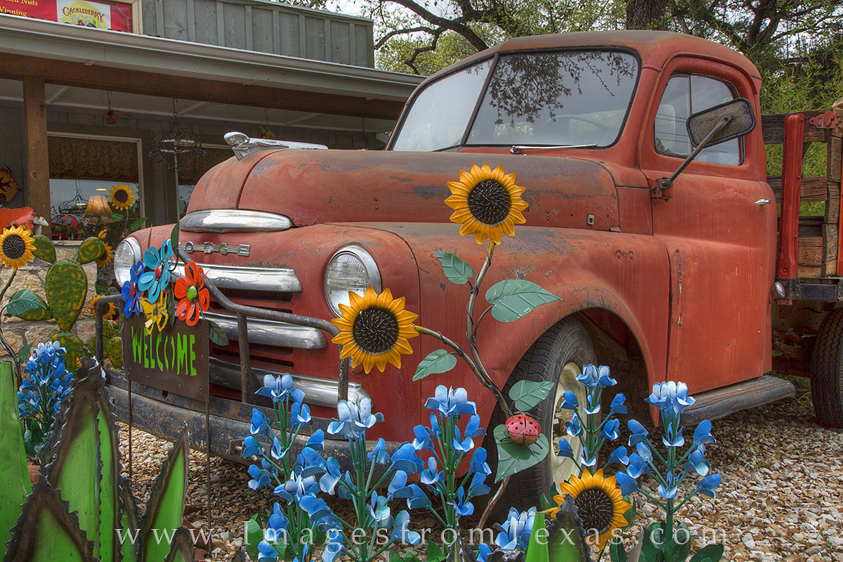 bluebonnets, bluebonnet images, bluebonnet pictures, bluebonnet photos, bluebonnet prints, texas bluebonnets, blue bonnets, blue bonnet, texas wildflowers, texas wildflower images, texas wildflower ph, photo