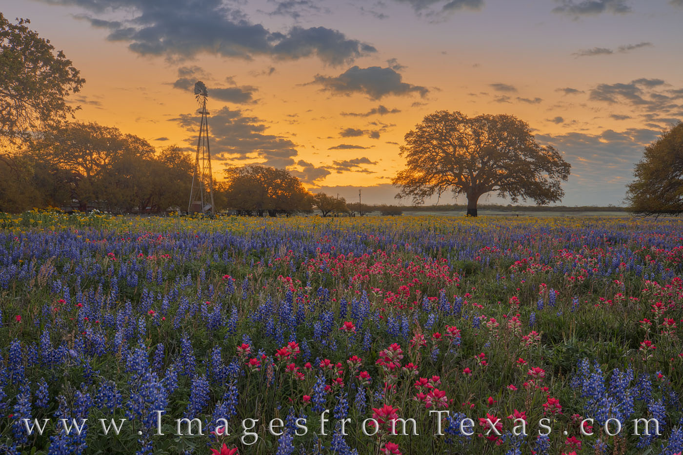 bluebonnets, paintbrush, windmill, sunrise, poteet, wildflowers, morning, spring, yellow, gold, orange, peace, photo
