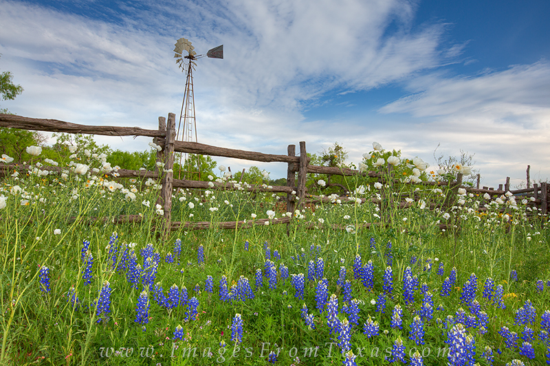 bluebonnets,windmill,texas hill country,poppies,texas landscapes,texas country roads, photo