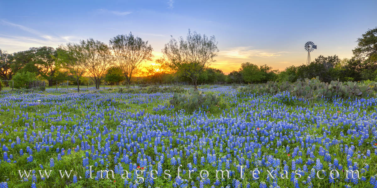 windmill, bluebonnets, sunset, indian paintbrush, johnson city, hill country, blue, panorama, photo