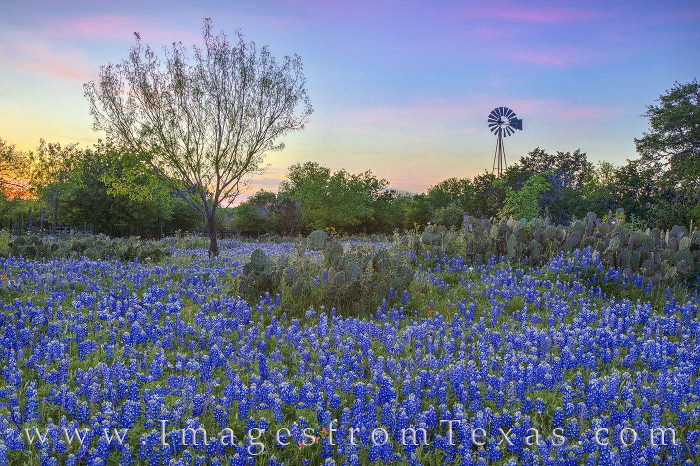 The sky turned soft pastel colors of pink and blue and orange in this sunset photograph of bluebonnets and a windmill. A friend...