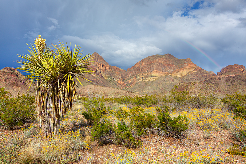 big bend national park,rainbow,yucca,texas landscapes,texas photos, photo